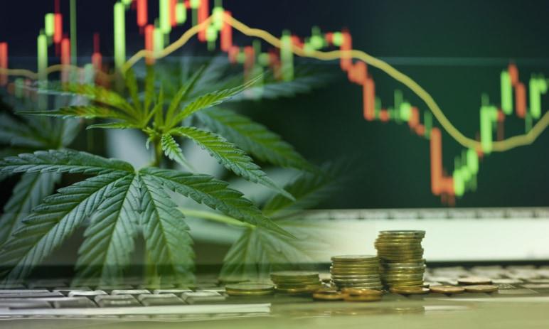 8 akciových titulů ze světa konopí - Vyčpělé odvětví, nebo spící gigant? Co čekat od investice do marihuany?